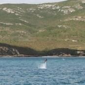 golfinhos (2)