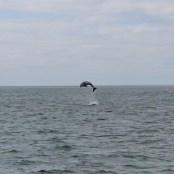 golfinhos (5)
