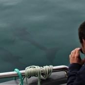 golfinhos (7)