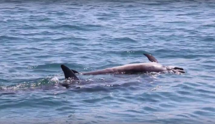"""As baleias e os golfinhos """"são como"""" os humanos"""